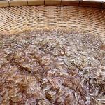 Okiami krill från Japan